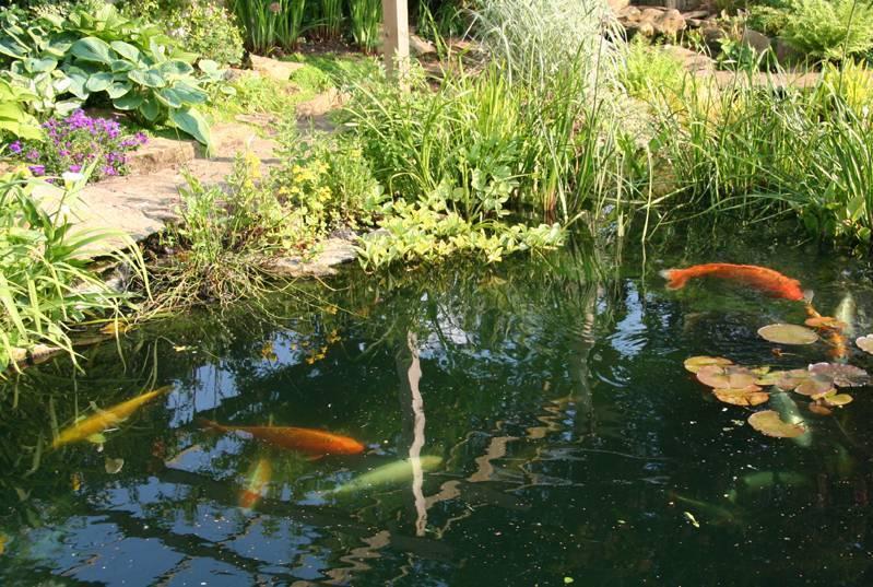 Водоем для разведения рыбы