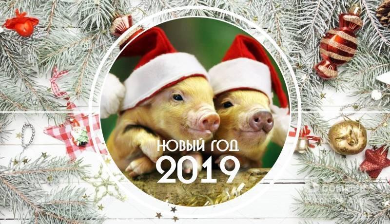 Новый год 2019 - Желтая земляная свинья (Кабан)